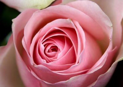 BR9306 big bou pink summer 5