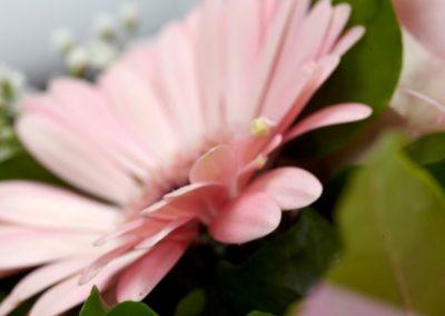 BRS4001 Pink Mini B24