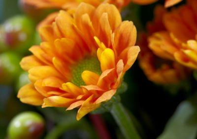 BRS9607 mini orange autumn 2