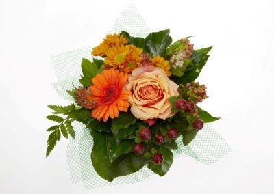 BRS9609 mini bicolor autumn