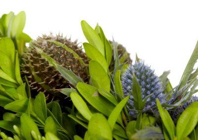 RF959 buxus ergyngium crops 1