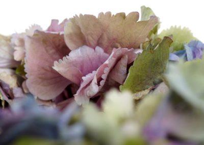 RF960 hydrangea wreath 1